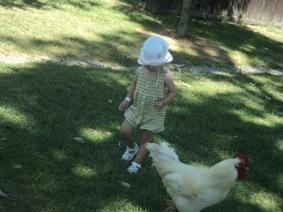 Isabelle chasing chicken