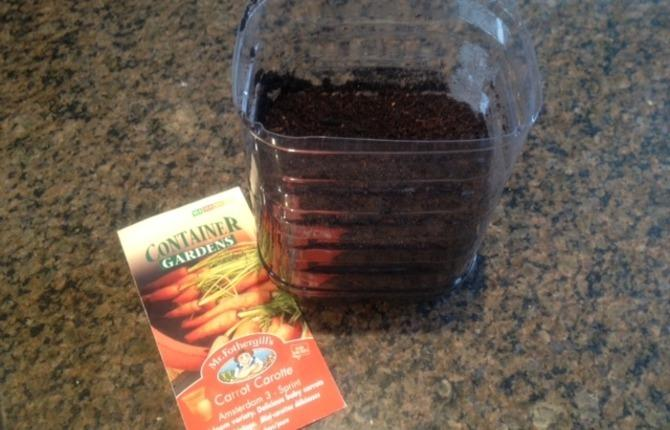 Blog 9 How do seed sprout photo1 1
