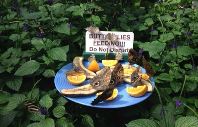 Butterflies feeding 1