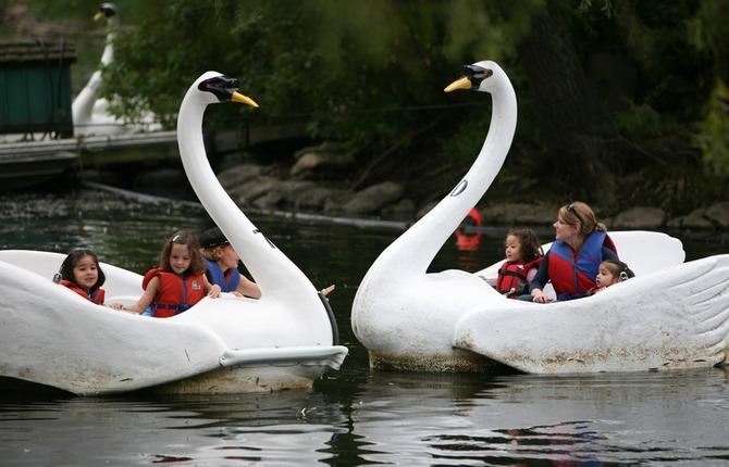 WEB Swans 1