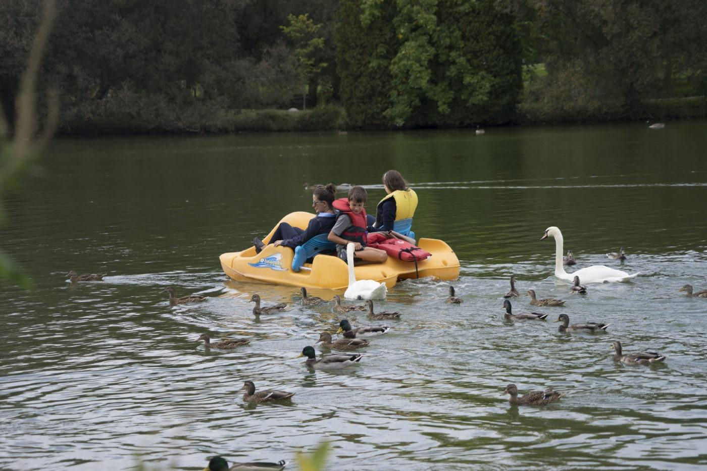 Lots of fun paddle boating on the Avon in Stratford WEB 1
